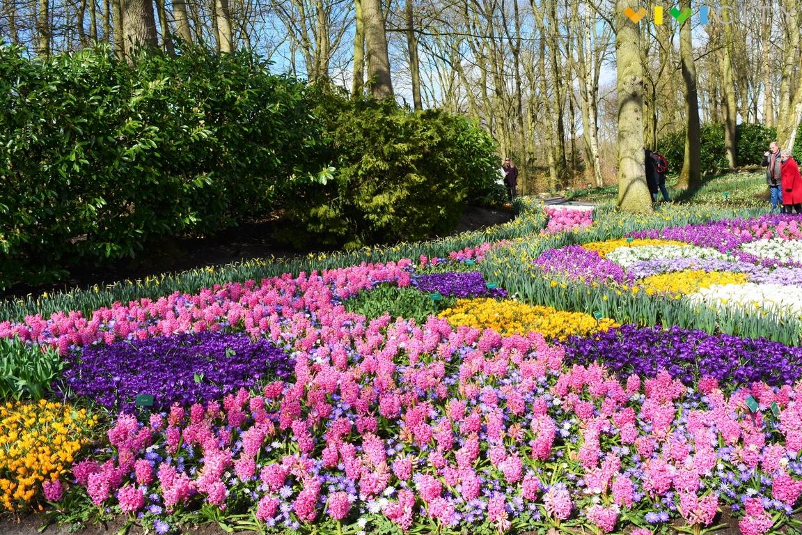 keukenhof 2018 visita il parco dei tulipani vicino amsterdam
